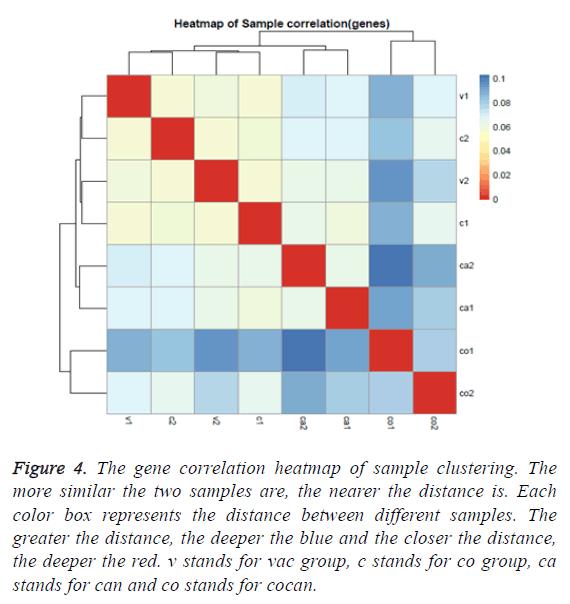 biomedres-gene-correlation-heatmap