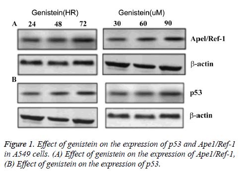 biomedres-genistein