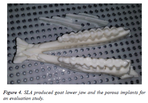 biomedres-goat-lower-jaw