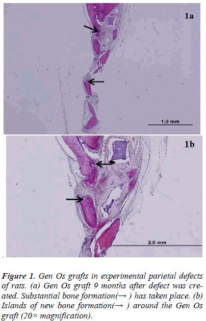 biomedres-grafts-experimental-parietal-rats
