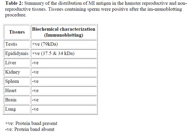 biomedres-hamster-reproductive