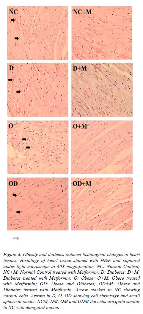 biomedres-heart-tissue