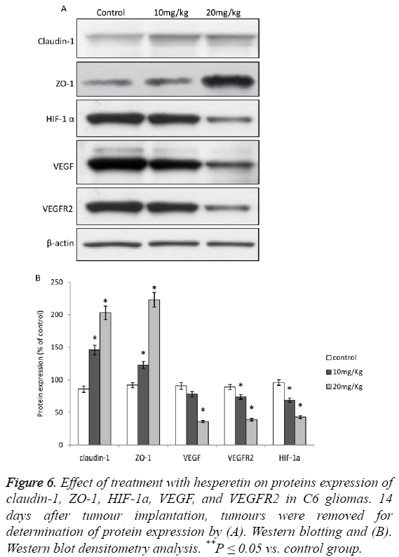 biomedres-hesperetin-proteins-expression