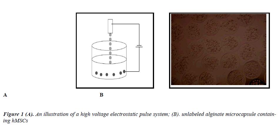 biomedres-high-voltage