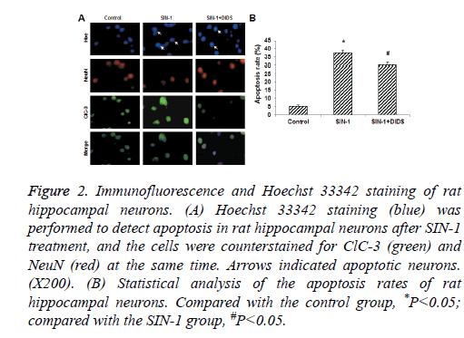biomedres-hippocampal-neurons