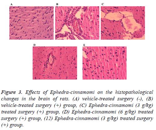 biomedres-histopathological