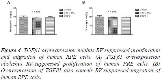 biomedres-human-PRE-cells