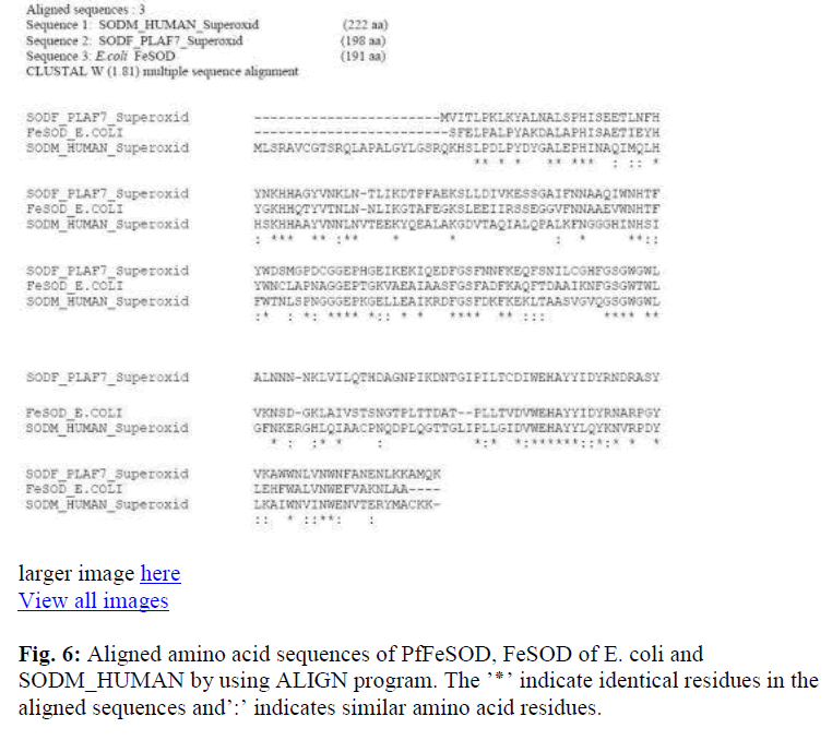 biomedres-identical-residues-aligned-sequences-amino-acid