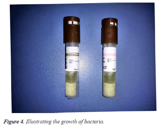 biomedres-illustrating-growth-bacteria