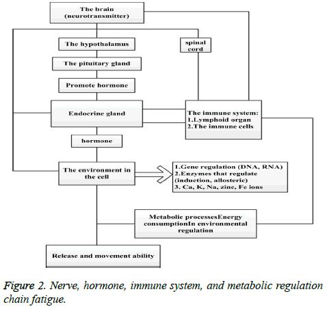 biomedres-immune-system