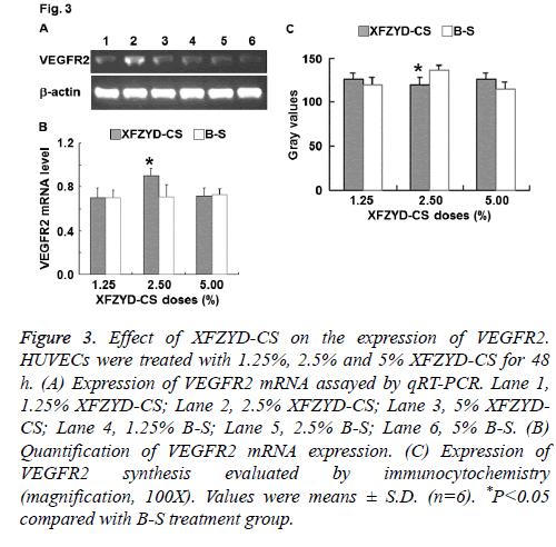 biomedres-immunocytochemistry-proliferation