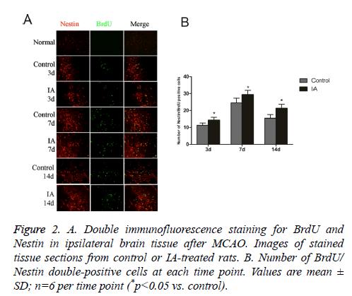 biomedres-immunofluorescence