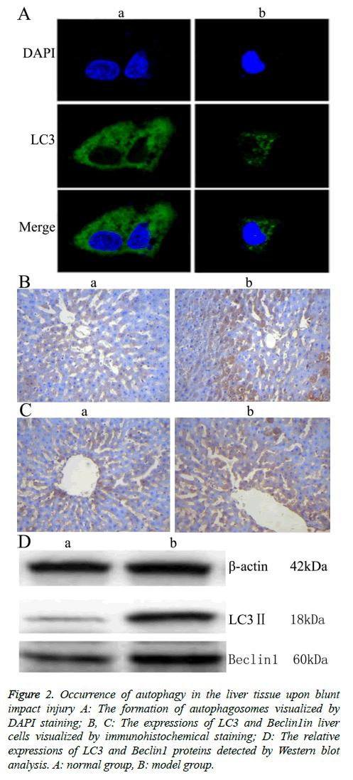 biomedres-immunohistochemical