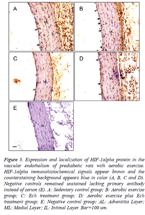 biomedres-immunohistochemical