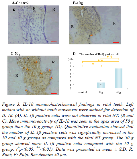 biomedres-immunohistochemical-findings