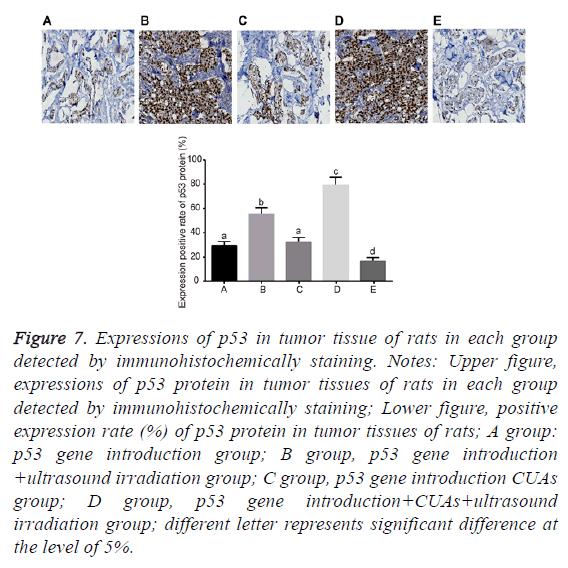 biomedres-immunohistochemically-staining