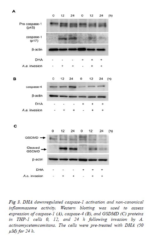 biomedres-inflammasome