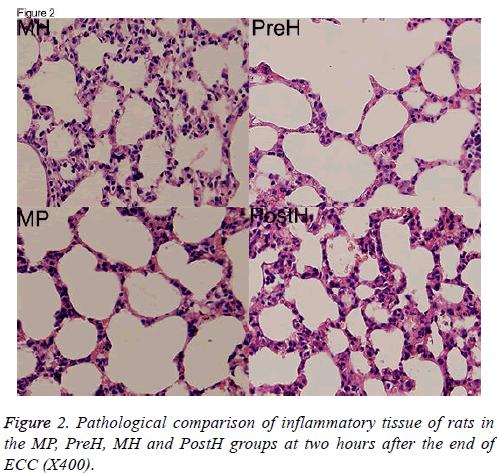 biomedres-inflammatory-tissue
