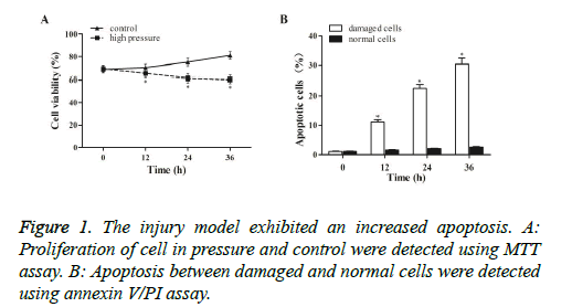 biomedres-injury-model
