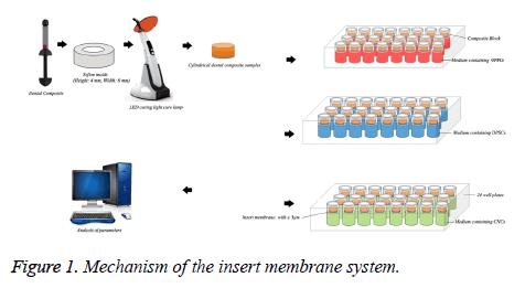 biomedres-insert-membrane