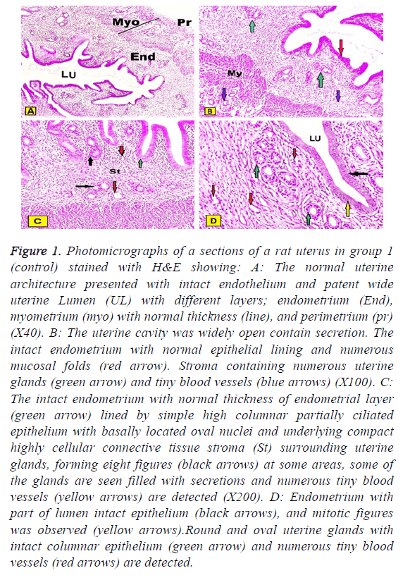 biomedres-intact-endothelium