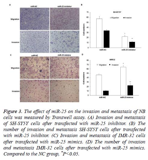 biomedres-invasion-metastasis