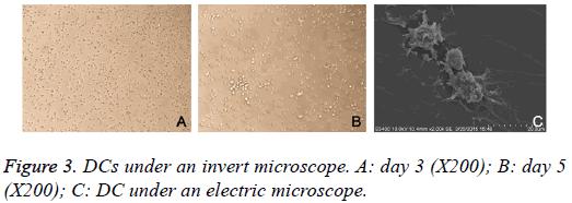biomedres-invert-microscope