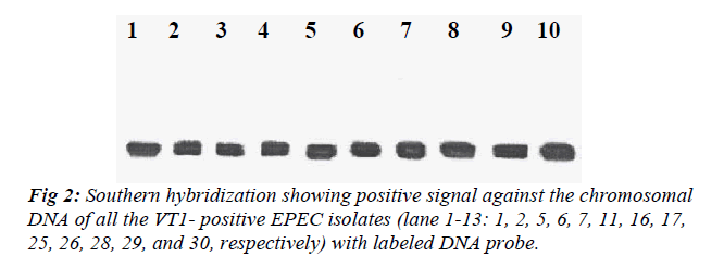 biomedres-labeled-DNA-probe