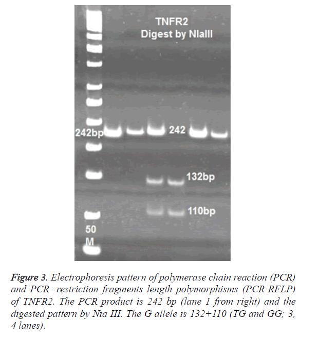biomedres-length-polymorphisms