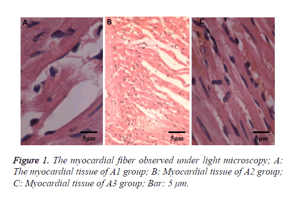 biomedres-light-microscopy