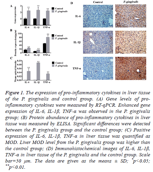 biomedres-liver-tissue