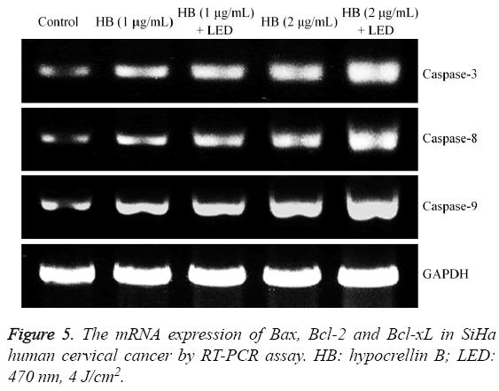 biomedres-mRNA-expression-Bax