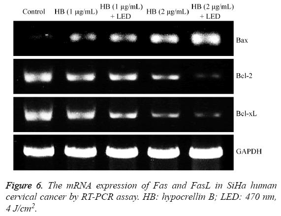 biomedres-mRNA-expression-Fas