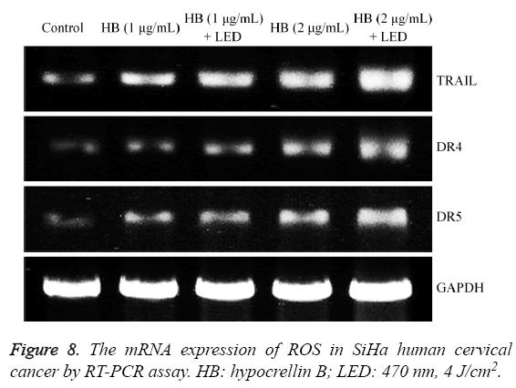 biomedres-mRNA-expression-ROS