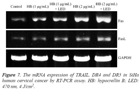 biomedres-mRNA-expression-TRAIL