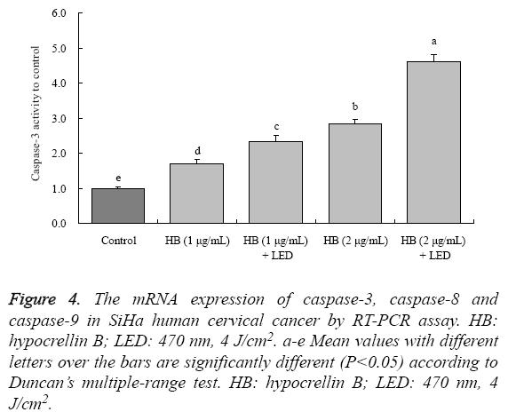 biomedres-mRNA-expression-caspase