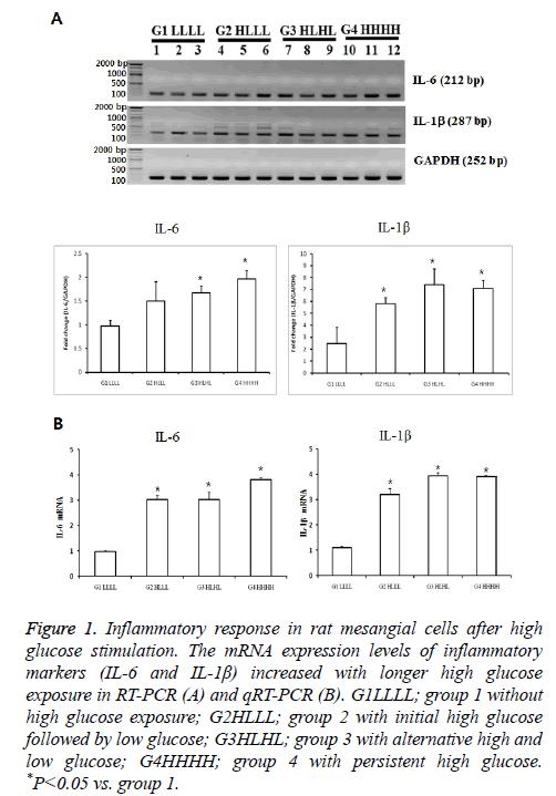 biomedres-mesangial-cells