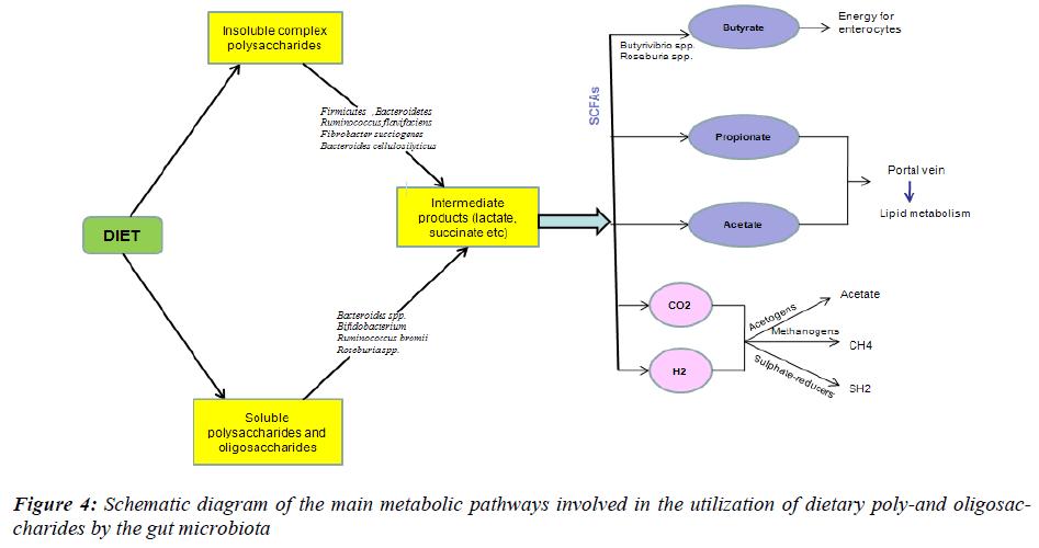 biomedres-metabolic-pathways