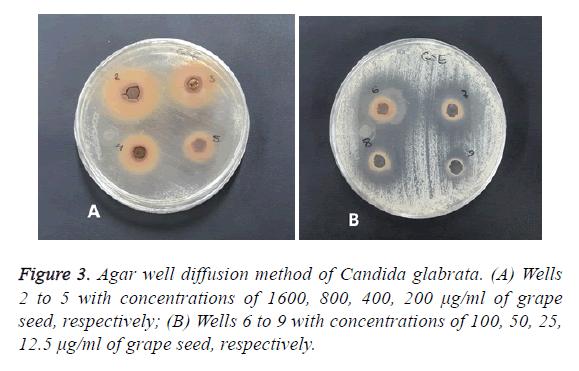 biomedres-method-candida-glabrata