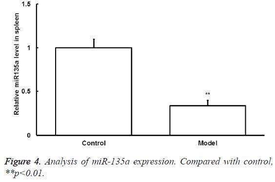 biomedres-miR-135a-expression