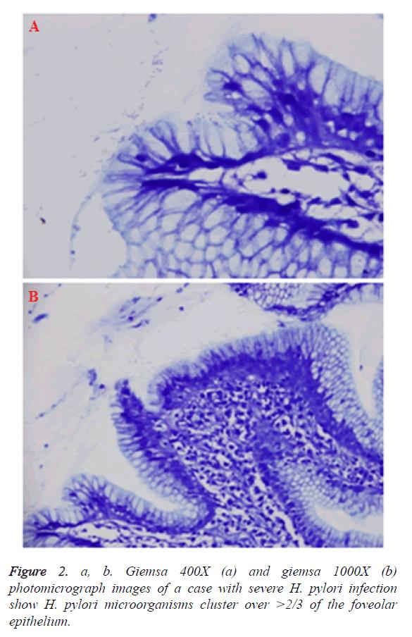 biomedres-microorganisms-cluster
