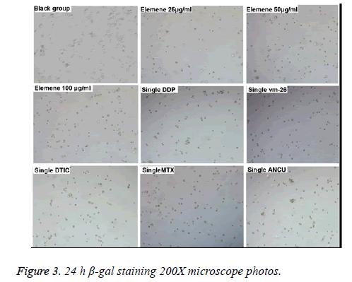 biomedres-microscope-photos