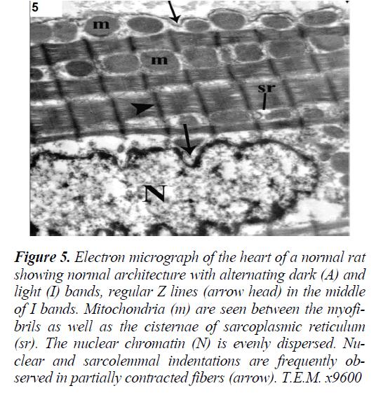 biomedres-minimal-Electron-micrograph