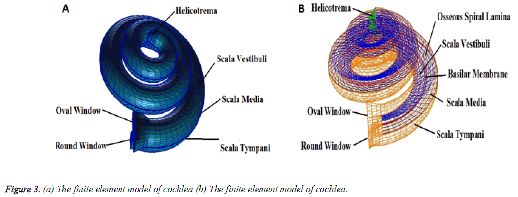 biomedres-model-cochlea