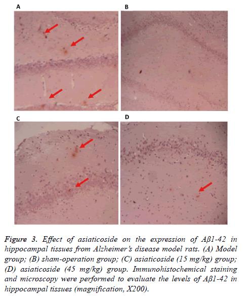 biomedres-model-rats
