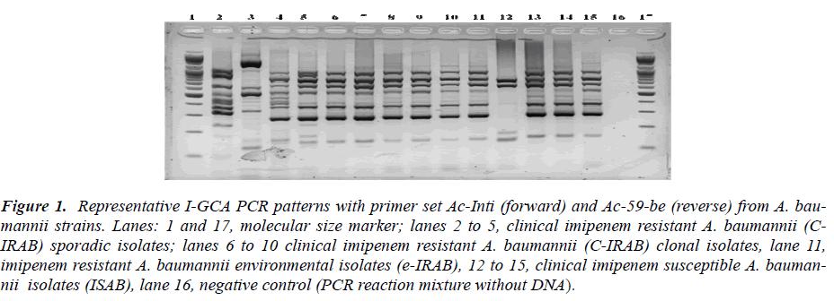 biomedres-molecular-size-marker