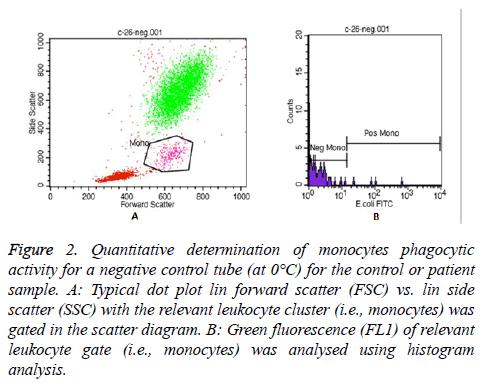 biomedres-monocytes-phagocytic