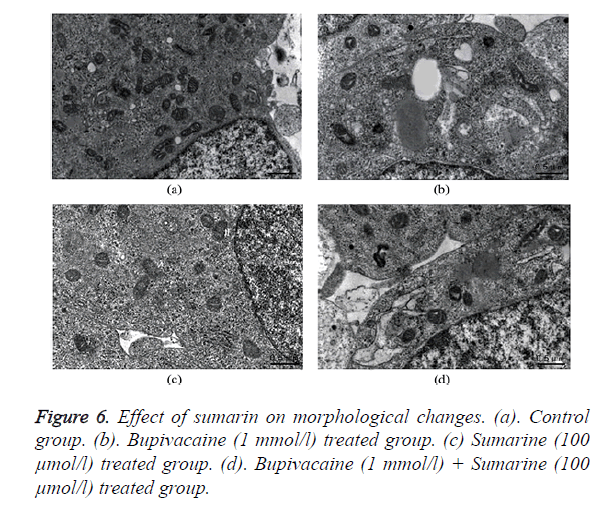 biomedres-morphological-changes