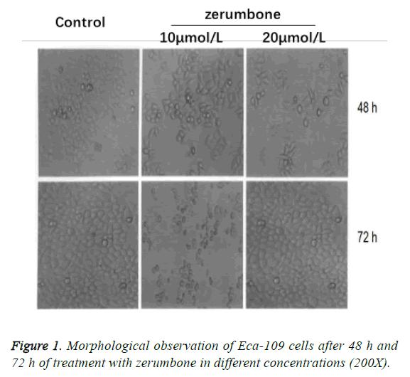 biomedres-morphological-observation