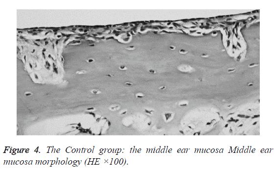 biomedres-mucosa-morphology